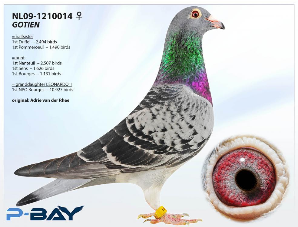 NL09-1210014